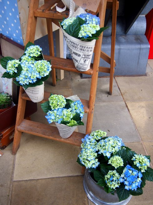 blue flowers florist